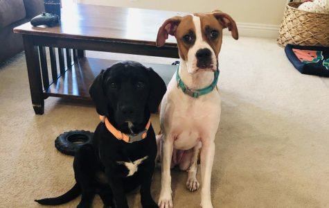 Luna and Tito