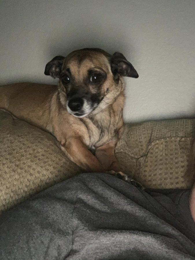 Ms. Porter's dog, Leela