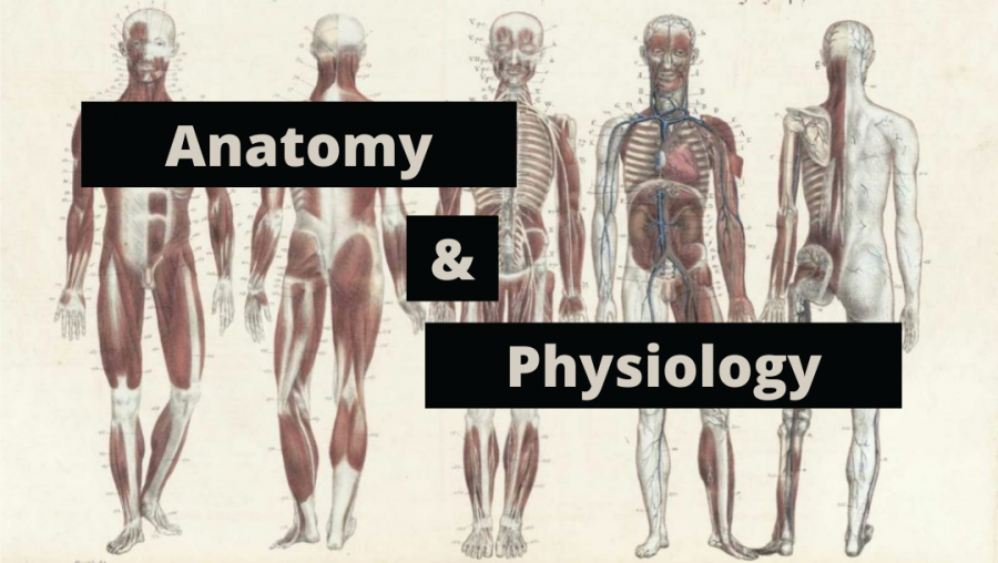 All+About+Anatomy+and+Physiology