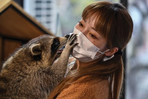 Raccoon with Lady in a Cafe
