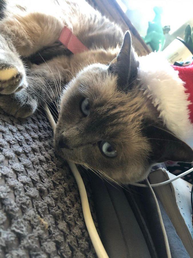 Kina Hoskins cat Newt