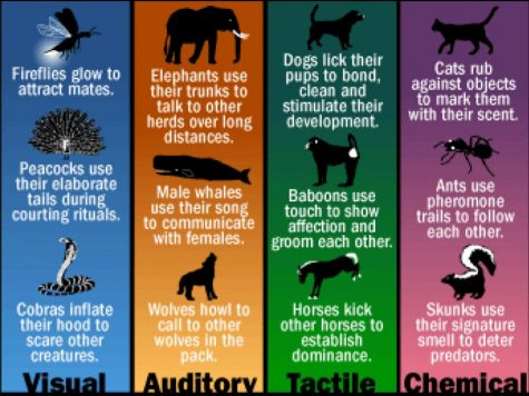 Different styles of communications for different animals.