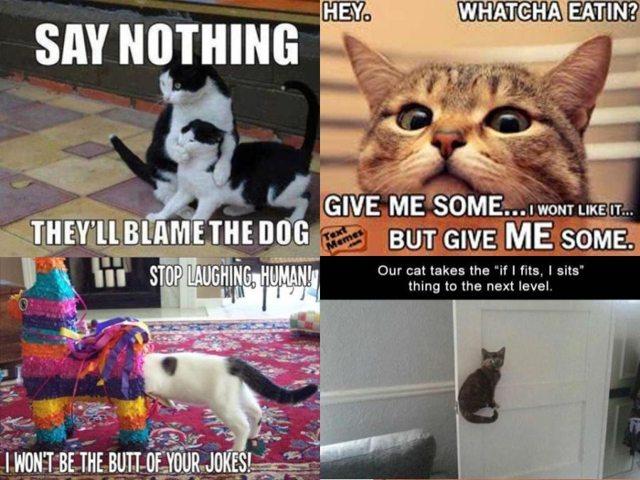 Cats are hilarious...when it's clean memes.