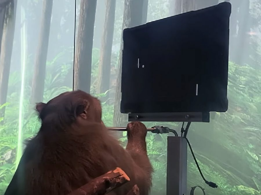 Pager the Monkey Playing Pong With Only HIs Brain